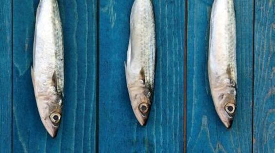 Variedades de pescados más comunes en el norte