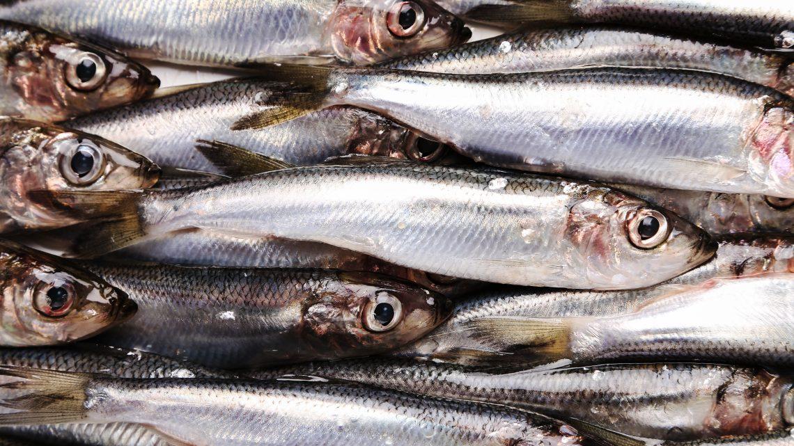 Beneficios de las anchoas para la salud